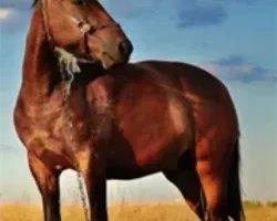 Litière Sciure - Saint-Thélo - Des bûches compressées adaptées à tous les types de foyers